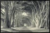 Cypress Tree Road  Point Reyes