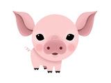 Baby Animals - Pig