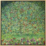 Apple Tree  1912