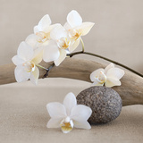 Orchidée blanche Reproduction d'art par Chatelain