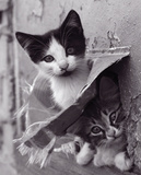 Cache-cache Chatons