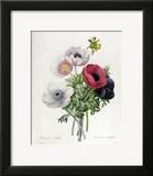 """Anemone: Simple  from """"Les Choix Des Plus Belles Fleurs"""""""