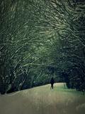 The White Walk
