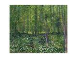 Trees and Undergrowth, c.1887 Reproduction d'art par Vincent Van Gogh
