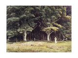 The Wooded Landscape  c1900