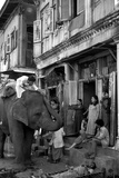 An Elephant Collects Tips from the Prostitutes on Falkland Road for Good Luck  Mumbai  1980