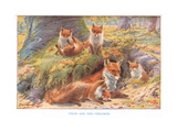 Vixen and Her Children  Illustration from 'Country Ways and Country Days'