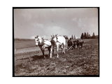 Ploughing on the Property of Alton Brooks Parker  Esopus Creek  New York  1904