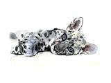Arabian Leopard Cub  2008