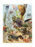 Life on the Sea Floor, Including Crustaceans and Molluscs Giclée