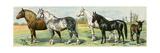 Horse Breeds: Belgian and Percheron Draft Horses  a Trotter  An Arabian  and a Donkey