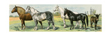 Horse Breeds: Belgian and Percheron Draft Horses, a Trotter, An Arabian, and a Donkey Giclée