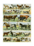 Dogs, Cats, Cattle, Horses, Goats, Sheep, Hogs, and Other Domesticated Animals Giclée