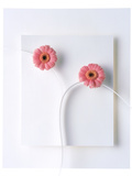 Two Vivid Pink Gerbera Daisy Blooms on White Stems with White Background