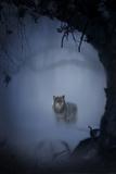 Wolfnight Papier Photo par Alexandra Stanek