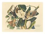 The Black Billed Cuckoo