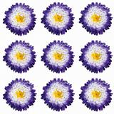 Polka Flowers I