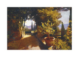 Lemon Tree Verona