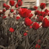Field of Roses II