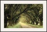 Evergreen Alley