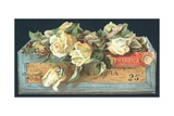 Roses in Cigar Box  Christmas Card