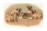 Four Pug Dogs Sitting around a Kitten on a Plate