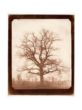 Oak Tree in Winter  Early 1840s