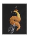 Cod Worm