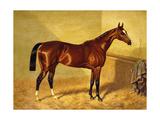 Orlando  a Bay Racehorse in a Loosebox  1845