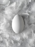 Egg on Feathers  Conceptual Image