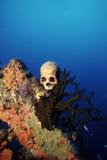 World War II Skull