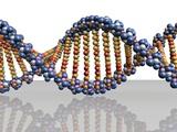 DNA Molecule  Computer Artwork