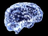 Brain  Neural Network