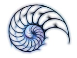 Sectioned Shell of a Nautilus  Artwork