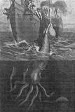 Gigantic Squid And Ship  19th Century
