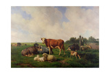 Animals Grazing in a Meadow