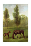 A Chestnut Mare and Foal in a Wooded Landscape  C1761-63