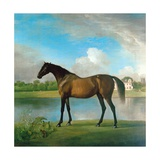 Lord Bolingbroke's Brood Mare in the Grounds of Lydiard Park  Wiltshire  C1764-66