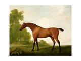A Bay Thoroughbred in a Landscape  1801