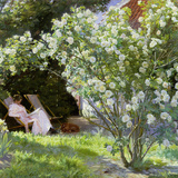 Roses  or the Artist's Wife in the Garden at Skagen  1883