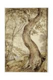Tree at Helmingham  C1800