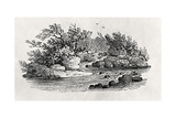 A Bend in the River  from 'Water Birds'  Published 1804