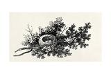 Bird's Nest  from the 'History of British Birds' Volume I  Pub 1797