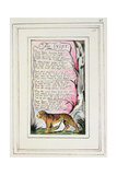 The Tyger: Plate 43 from 'Songs of Innocence and of Experience' C1802-08