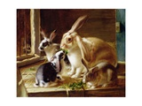 Long-Eared Rabbits in a Cage  Watched by a Cat