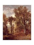 Woodland View in Suffolk