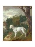 """""""Bumper""""  a Bull Terrier  1745"""