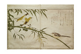 P332-1946 Vol2 F6 Long-Tailed Tit and Three White Eyes  from an Album 'Birds Compared in…