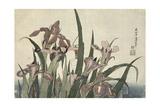Irises and Grasshopper  Pub by Nishimura Eijudo  C1832