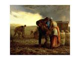 The Potato Harvest  1855
